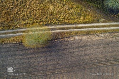 droonifotod pildistamine drooniga põllul