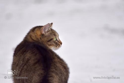 lemmikloomade fotograaf kasside pildistamine